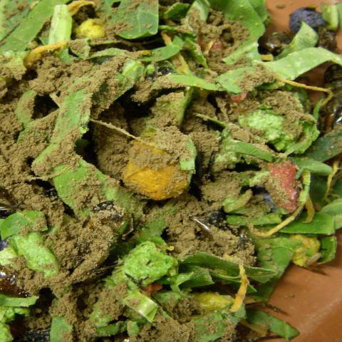 サプリメント 食べる土