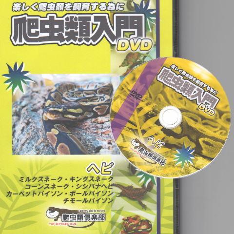 爬虫類入門DVD 【ヘビ】