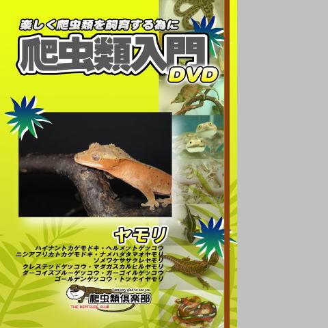 爬虫類入門DVD 【ヤモリ】