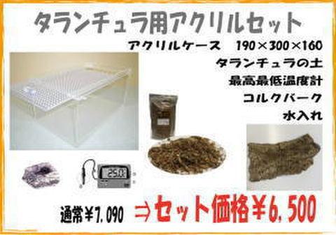 タランチュラ/サソリ用 アクリルセット