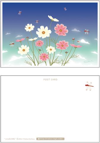 とんぼと秋桜