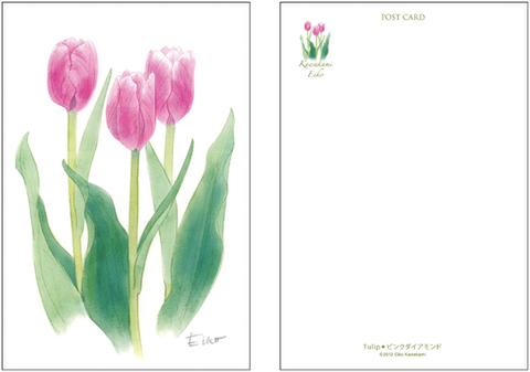 Tulip●ピンクダイアモンド