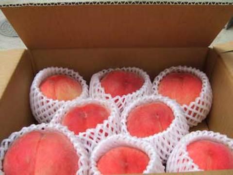 桃(白凰)7~8個入り約1.5kg(本州送料込み)