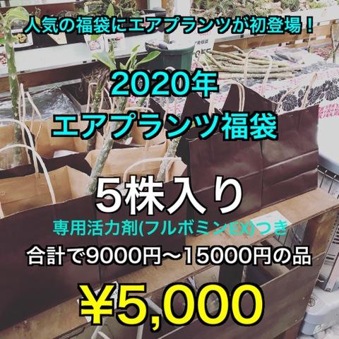 【福袋2020】エアプランツ5株と専用活力剤の福袋(9000円~15000円相当)●限定5セット