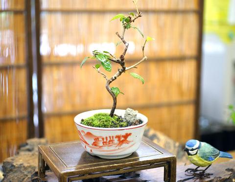 富士桜 (媛)