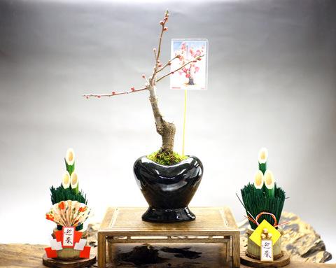 梅 【寒紅梅・緋の司】・インテリアハート 黒・