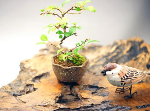 富士桜 (媛) 信楽焼 鉢