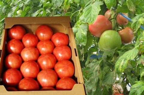 有機JASトマト(4kg箱)