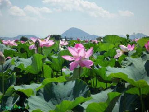 In Bloom(蓮シリーズⅡ)