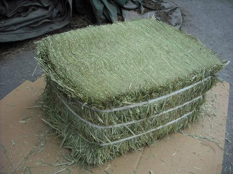 チモシー(牧草、アメリカ産)