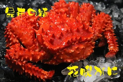 花咲かに 1尾 1.5kg~2kg ボイル