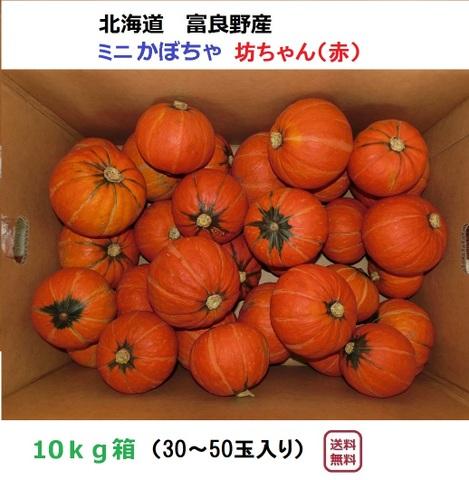ミニかぼちゃ(赤)坊ちゃん10kg(30~50玉入)