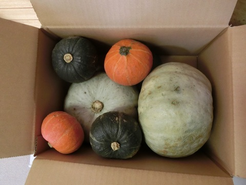 かぼちゃ 詰め合わせセット 5kg