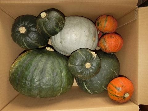 かぼちゃ 詰め合わせセット 10kgX2箱【お徳用】