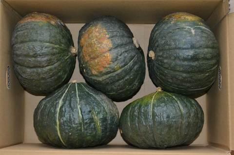 かぼちゃ 九重栗10kg(5~6玉入)X2箱【お徳用】