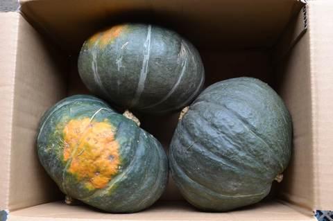かぼちゃ 九重栗5kg(3玉入)