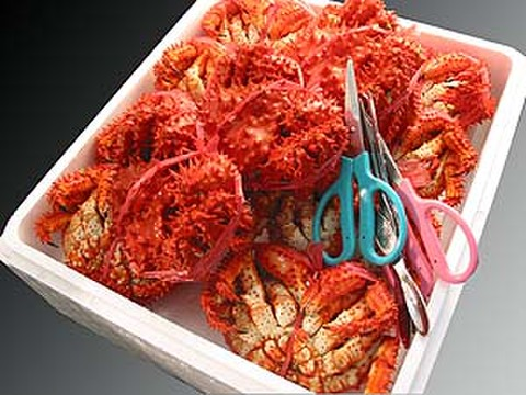 花咲蟹 大箱満杯詰 小 約3kg