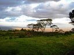 農園指定タンザニアブラックバーン農園200g粉