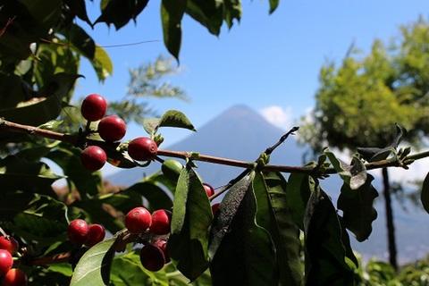 グアテマラ サンタカタリーナ 200g粉
