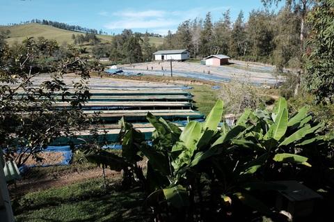 パプア ニューギニア 東山岳州 モリータ農地200g粉