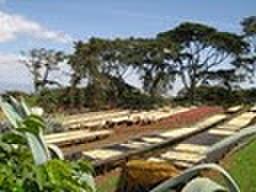 農園指定タンザニアブラックバーン農園200g豆