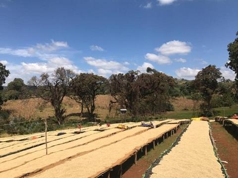エチオピア グジ ウラガ ハロワト200g豆