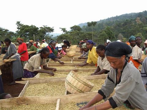 エチオピア イルガチェフェ ゲテオ クレイウオット200g豆