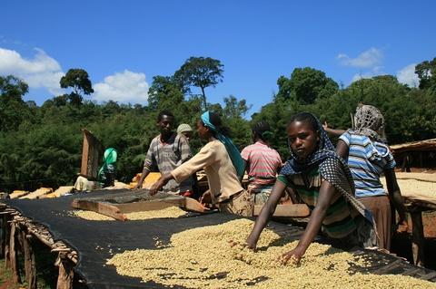 エチオピア グジ ウラガ ハロワト200g粉
