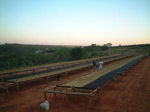 ブラジル  チーマ農園200g豆