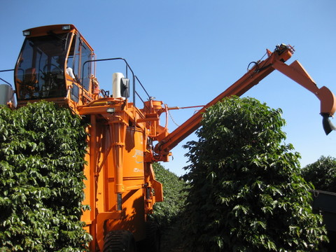 ブラジル  チーマ農園200g粉