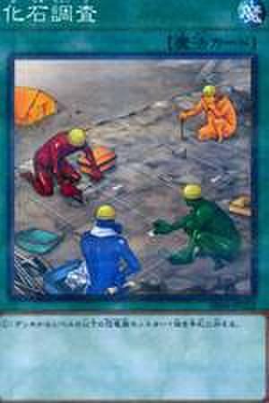 化石調査 N [ANPR-JP062・6期]