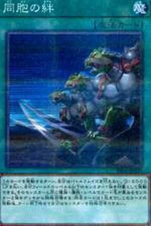 同胞の絆 N [DBGC-JP041]