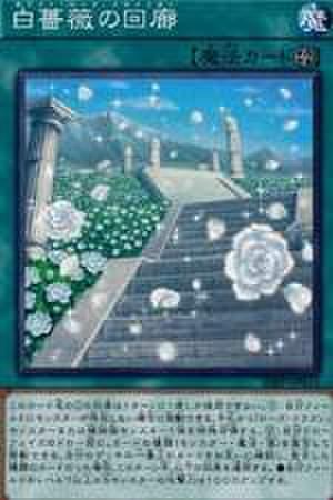 白薔薇の回廊 UR [20PP-JP011]