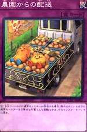 農園からの配送 N [YCPC-JP003]