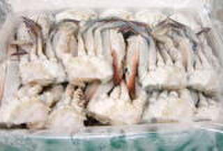 切り渡り蟹Mサイズ【kg950税抜き】