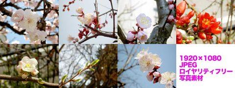 桜など(春の写真)1