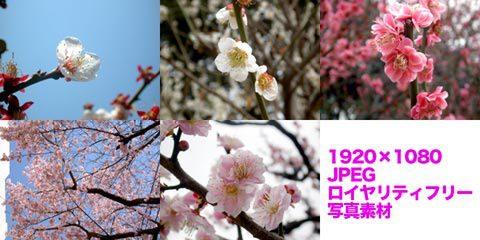 桜など(春の写真)2