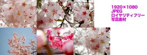 桜など(春の写真)3