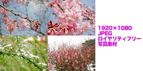 桜など(春の写真)4