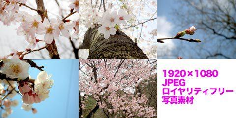 桜など(春の写真)5