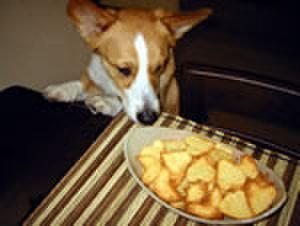 りんごとクリームチーズのクッキー(100g)