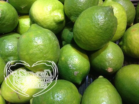 無農薬栽培 レモン 1kg