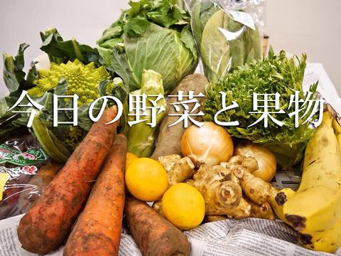 今日の野菜セット【定期5回分】たまご有orたまご無