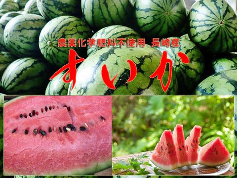 極旨スイカ 2玉入り 6.6~7.2kg 長崎 農薬不使用