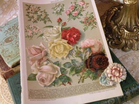 アンティークプリント ぷっくりとした薔薇と小花 古書図鑑の紙片 ボタニカルアート