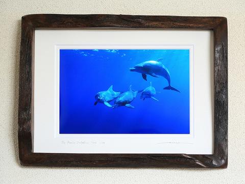 The Bonin Dolphins #002