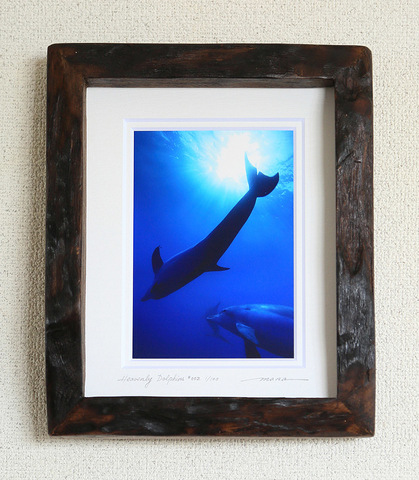 Heavenly Dolphins #002