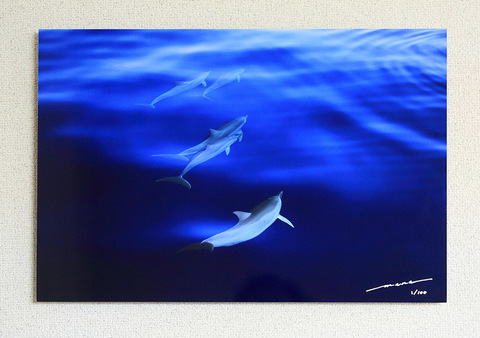 Bonin Spinner Dolphins #001