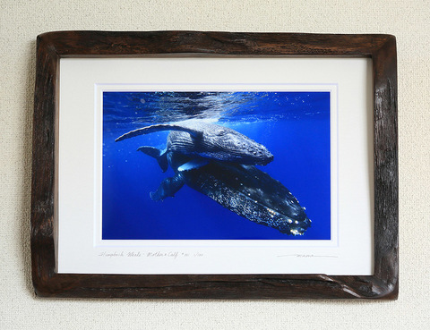 Humpback Whale Mother & Calf #001