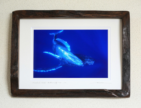 Humpback Whale Mother & Calf #002
